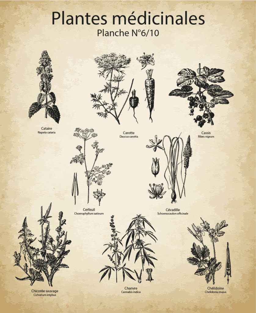 Ancient Medicinal Plants