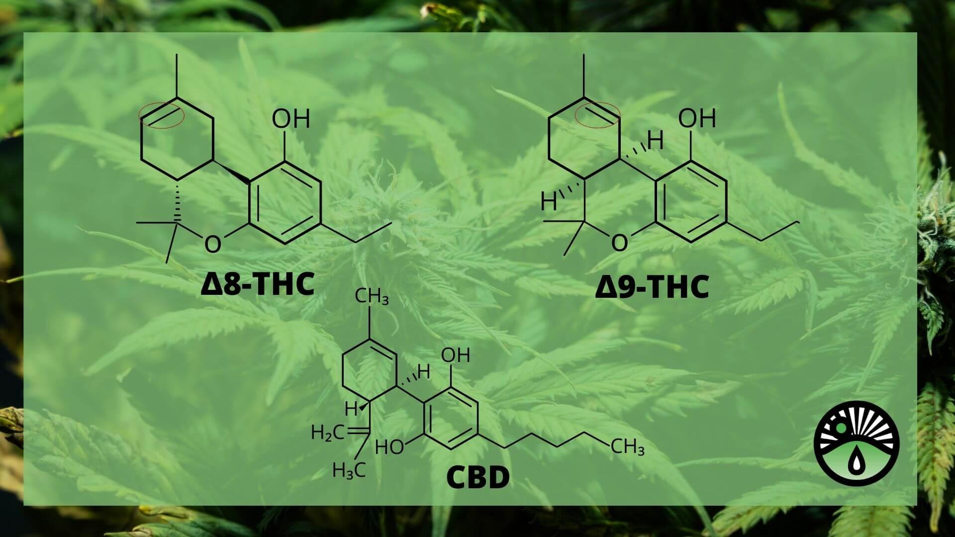 Delta 8 THC, Delta 9 THC and CBD Molecule Comparison